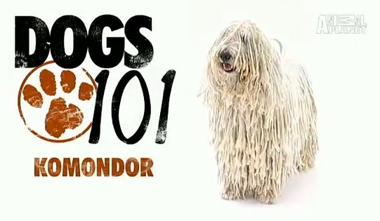 Animal Planet Video Komondor