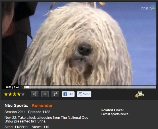 NationalDogShow2011a