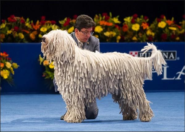 strange dog breed
