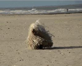 komondor beach feature image