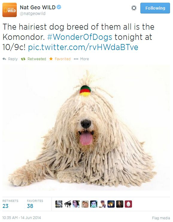 wonder of dogs tweet